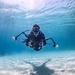 ollie_underwater
