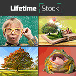 LifetimeStock