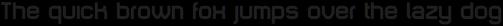 Animus Bold