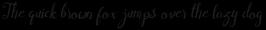 Cymbidium Italic