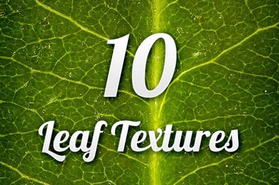 leaf-textures-pack-001-f