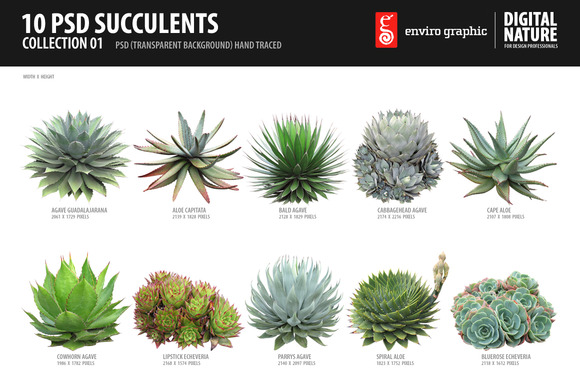 10 PSD Succulents Collection by envirographic