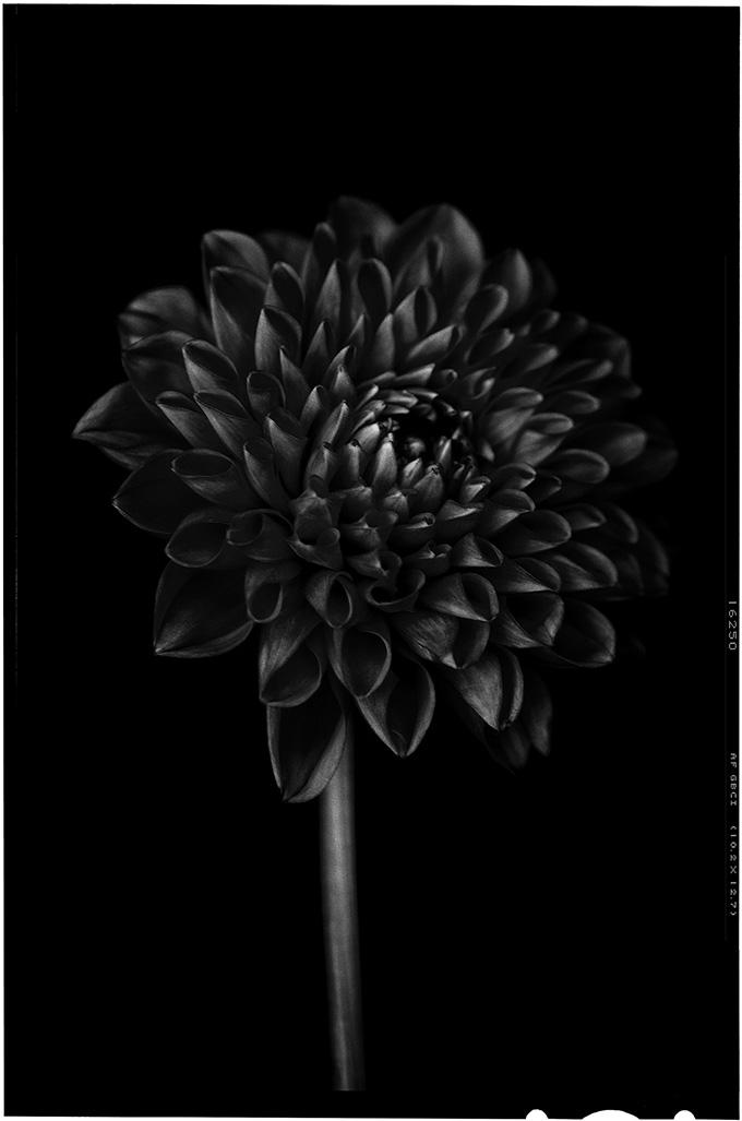 blacktoblack-2