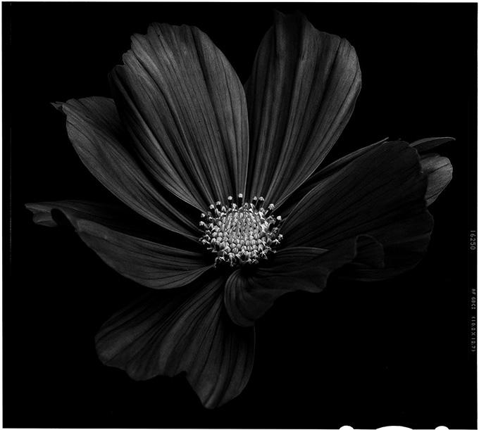 blacktoblack-5
