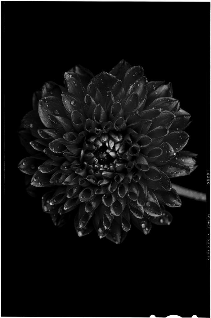 blacktoblack-6