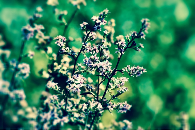parkway flowers