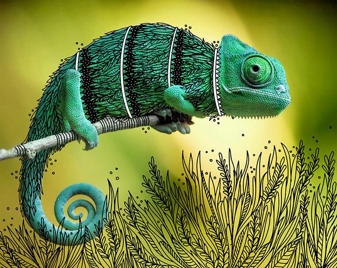 illustrated chameleon