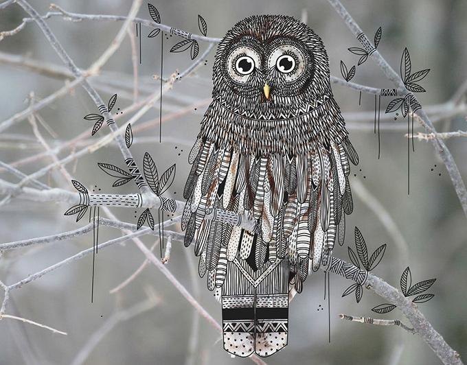 Illustrated owl