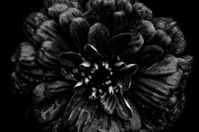 Back to Black: A Hauntingly Beautiful Photo Series