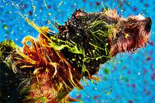 Ugly Dogs Create Beautiful Art