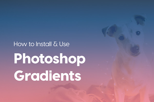 The Best Tricks To Reduce Photoshop File Size Creative Market Blog - Guy uses photoshop to turn his miniature dog into a giant